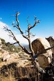 dead tree landscape vertical poster