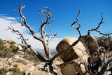 dead tree landscape horizontal poster