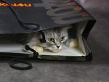 kitten in a box poster