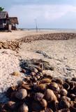 coconut tide poster