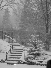 snowfall on the steps and trees