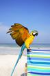 guacamayo en la playa