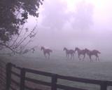 horses running poster