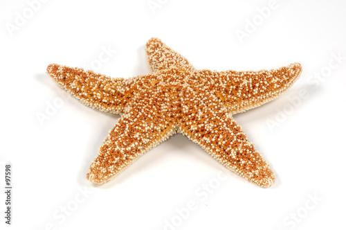 starfish - 97598
