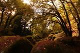 Fototapety fôret en automne