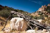 dead log landscape poster