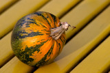 striped pumpkin poster