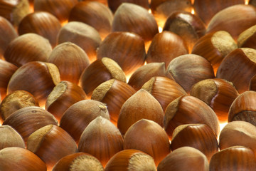 timber nut