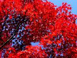 automne coréen 4 poster