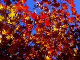 automne coréen 3 poster