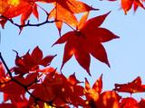 automne coréen 2 poster