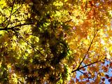 automne coréen 1 poster