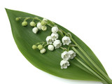lily of the valley isolated poster