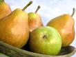 Quadro pears