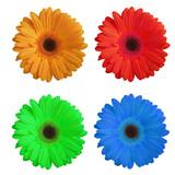 bouquet de fleurs poster