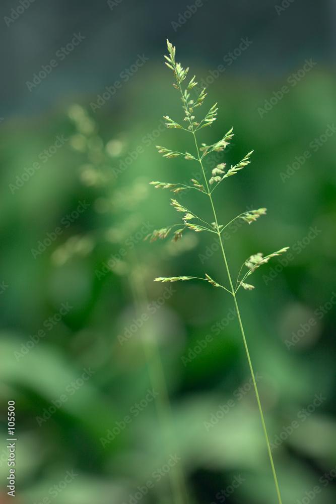 natura zielony szypułka - powiększenie