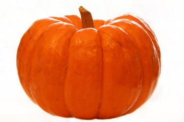 little pumpkin ii (isolated)