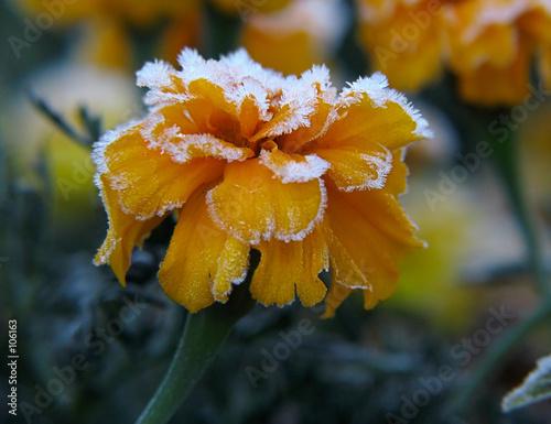 Fototapeten,gelb,blume,blühen,blooming