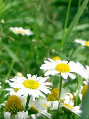 green meadow