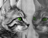 Fototapeta kociak - potwór - Odbicie i Lustro