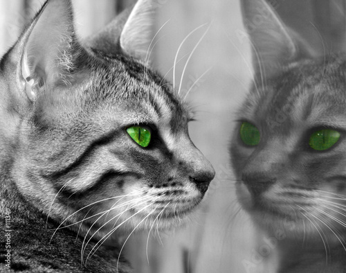 Fototapety, obrazy : green eyed monster
