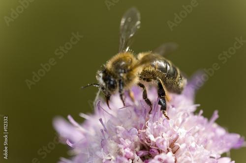 Tuinposter Bee abeille