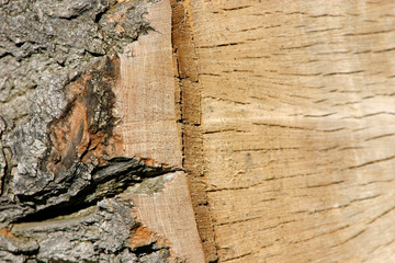 trunk close up