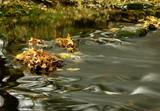 river - 112946