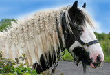 the gypsy horse poster