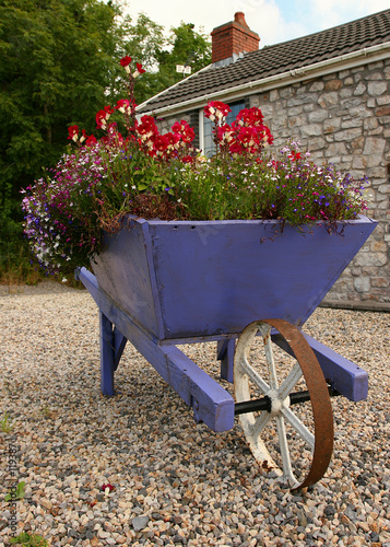 flower laden wheelbarrow
