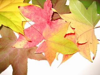 tas de feuilles