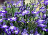 flower - 121119