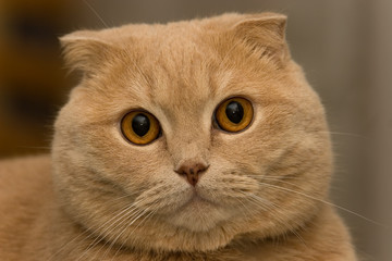 cat tonik 04