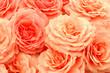 exquisite roses