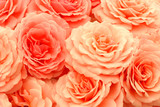 exquisite roses poster