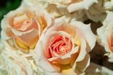 paul bocuse rose poster