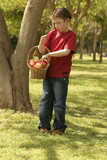 child holding a basket of apples poster