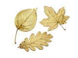 three golden leaves poster