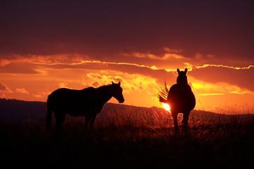 chevaux couché de soleil
