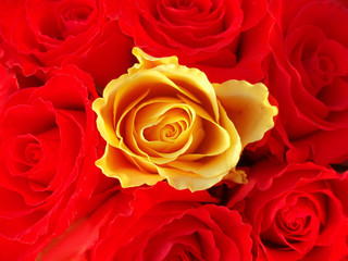 bunch of red roses with one single yellow one
