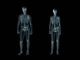 xray, x-ray of the human body man and woman.