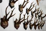 dead deers poster