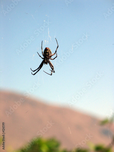floating spider