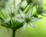 green flower poster