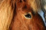 danish horses 18 poster