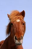 danish horses 16 poster