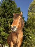 danish horses 21 poster