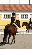 danish horses 17 poster