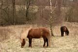 danish horses 01 poster