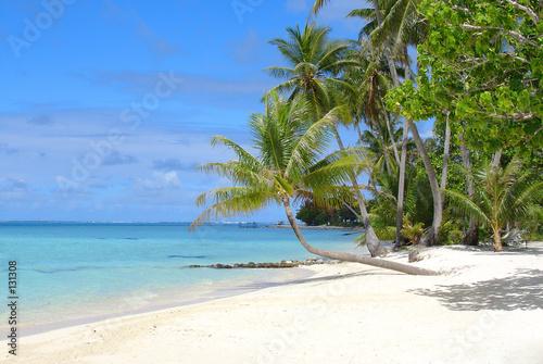 tropical beach dream